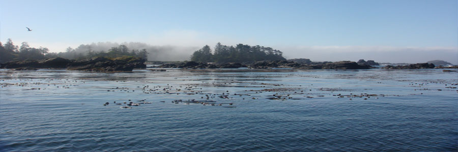 Ucluelet-banner2