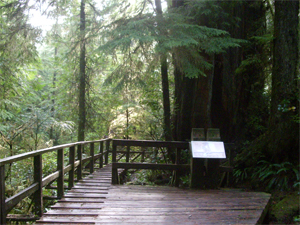 rainforesttrail